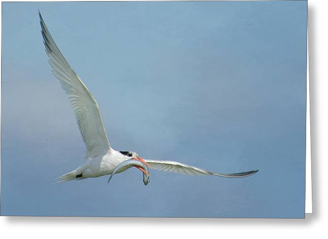 Tern Greeting Cards - Meal On The Fly Greeting Card by Fraida Gutovich