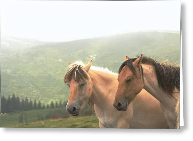 Trance Greeting Cards - Meditative Horses Greeting Card by Dagmar Ceki