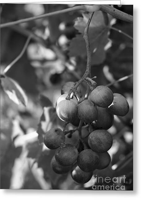 Fuits Greeting Cards - Mediterranean Grapes in Monochrome Greeting Card by Angelo DeVal