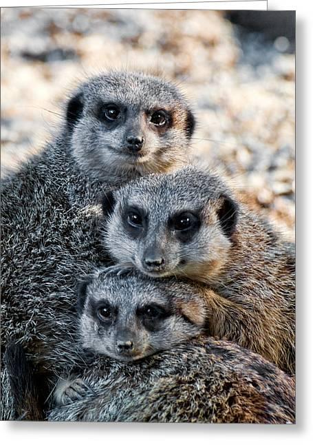 Meerkat Family Greeting Card by Ginger Wakem