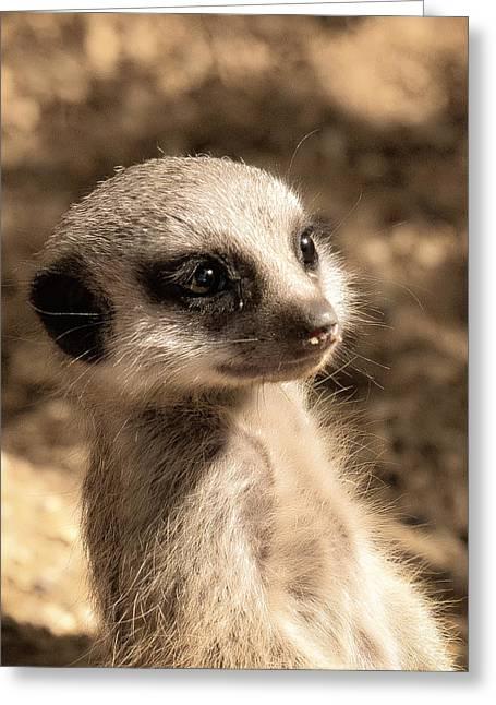 Meerkat Photographs Greeting Cards - MeerkatPortrait Greeting Card by Chris Boulton