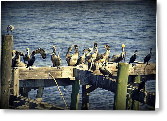 Cedar Key Greeting Cards - Meeting of the Minds Greeting Card by Laurie Perry
