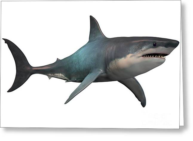 White Shark Greeting Cards - Megalodon on White Greeting Card by Corey Ford