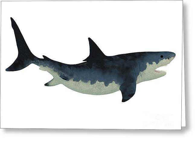 White Shark Greeting Cards - Megalodon Shark over White Greeting Card by Corey Ford
