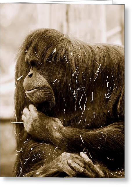 Orang-utans Greeting Cards - Melancholy Greeting Card by Lesley Smitheringale
