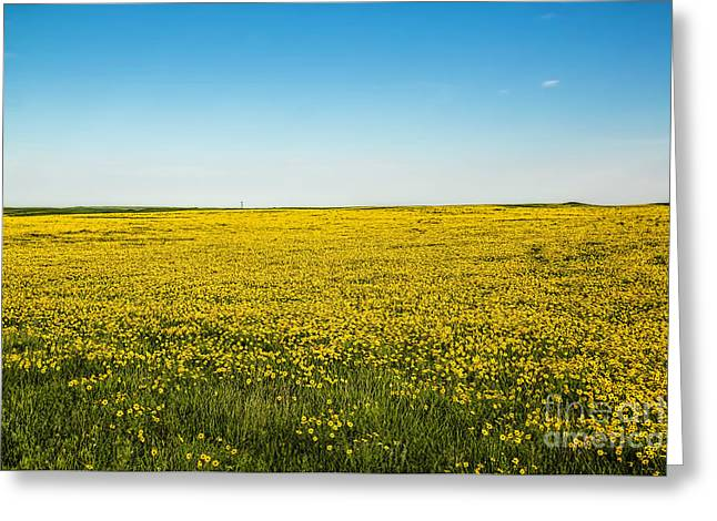 Yellow Sunflower Greeting Cards - Mello Yellow Greeting Card by Jon Burch Photography