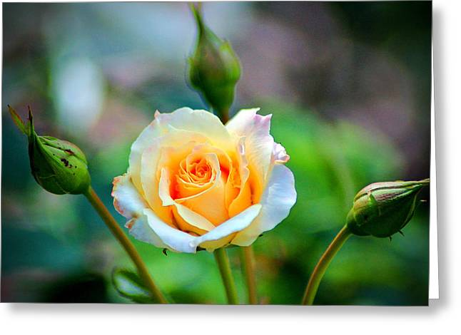 Layers Greeting Cards - Mellow Yellow Greeting Card by Cynthia Guinn