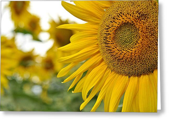 Mellow Yellow Greeting Card by Joanne Brown