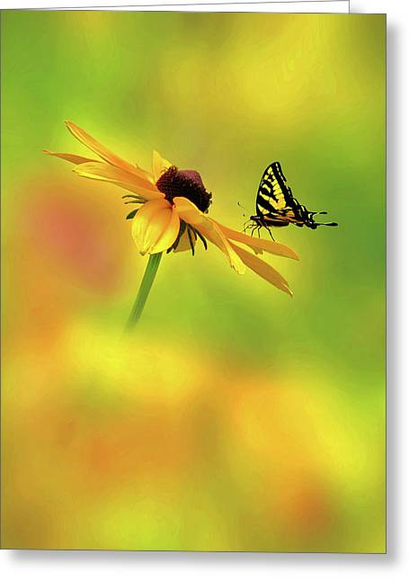 Common Tiger Butterfly Greeting Cards - Mellow Yellow Greeting Card by John  Poon