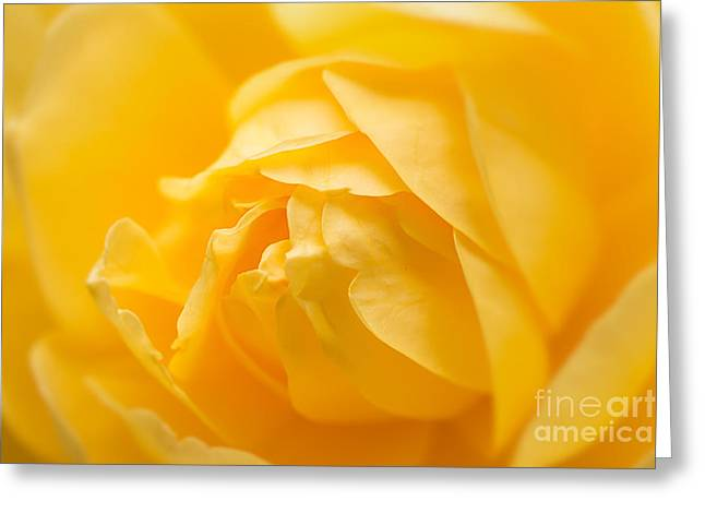 Flower Blooms Greeting Cards - Mellow Yellow Rose Greeting Card by Ana V  Ramirez