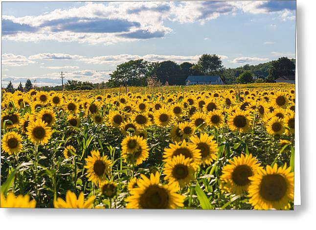 Mellow Yellows Greeting Card by Kristopher Schoenleber