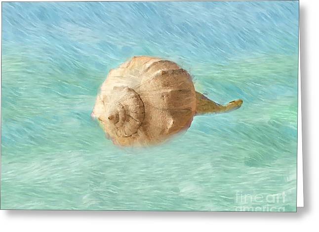 Shell Texture Digital Art Greeting Cards - Melody of the Sea Greeting Card by Betty LaRue