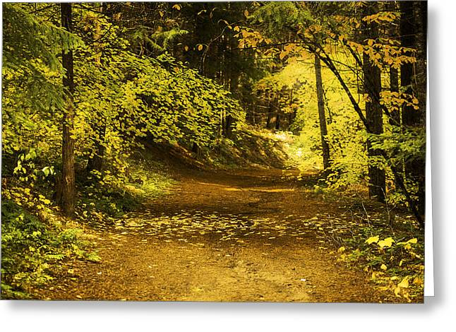 Fall Colors Greeting Cards - Memories of Autumn Greeting Card by Diane Schuster