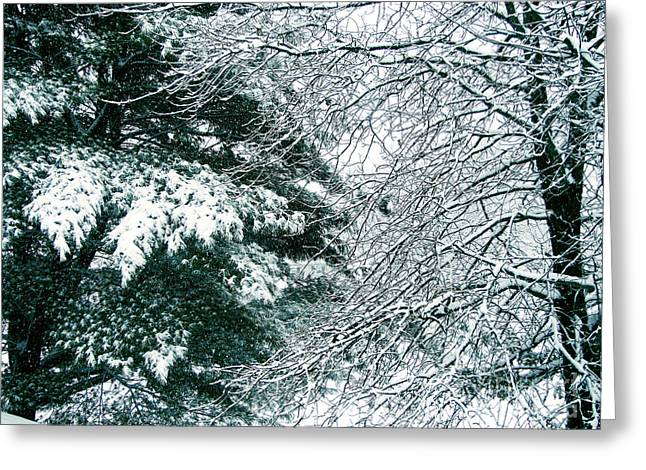 Kitten Prints Greeting Cards - Memory of Winter Past Greeting Card by Phil Welsher