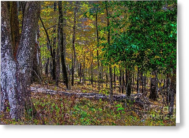 Mendon Greeting Cards - Mendon Forest Greeting Card by William Norton
