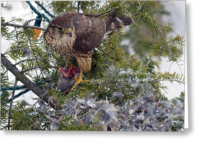 Christmas Greeting Greeting Cards - Merlins feast on the Christmas tree Greeting Card by Asbed Iskedjian