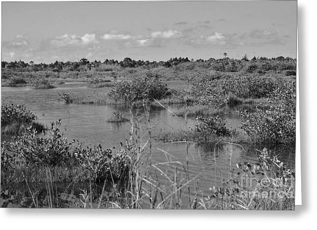 Mangrove Forest Greeting Cards - Merritt Island Wetlands Greeting Card by Chuck  Hicks