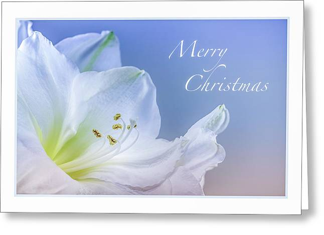 Christmas 3 Greeting Card by Mona Stut