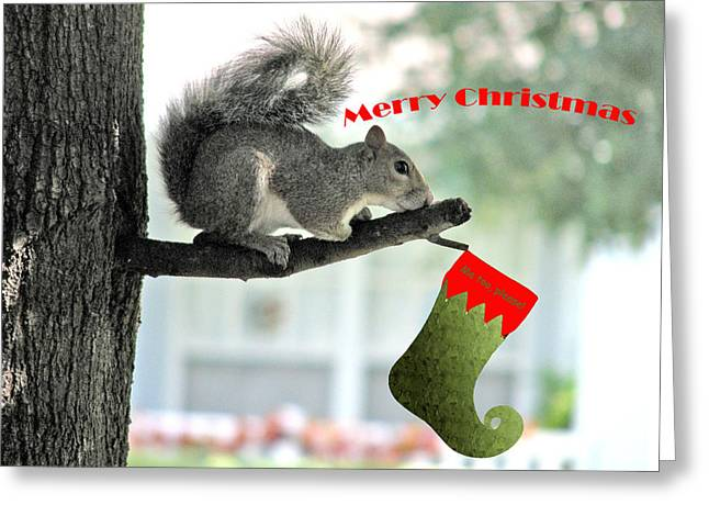 Squirrel Digital Greeting Cards - Merry Christmas To All Greeting Card by Adele Moscaritolo