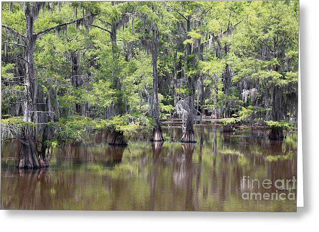 """caddo Lake"" Greeting Cards - Mesmerizing Caddo Lake Greeting Card by Carol Groenen"