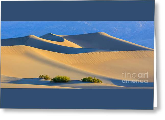 Acryl Greeting Cards - Mesquite Flat Sand Dunes in Death Valley National Park Greeting Card by Henk Meijer Photography