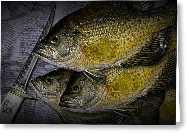 Crappies Greeting Cards - Mess of Fish to Clean Greeting Card by Randall Nyhof