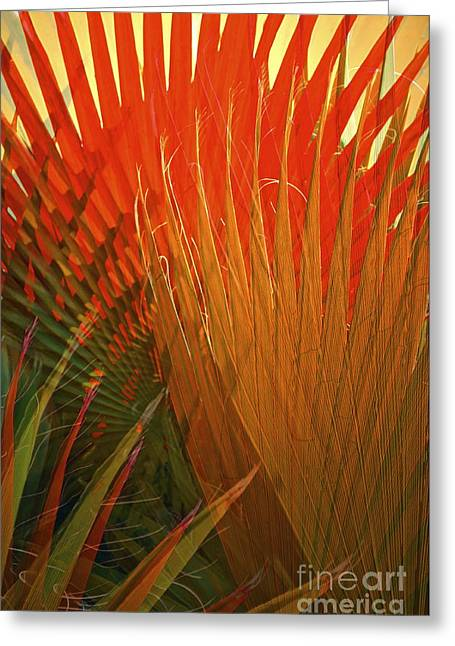 Tropical Plants Greeting Cards - Mexican Palm Greeting Card by Gwyn Newcombe