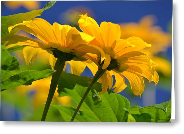Mexican Sunflower Tree Greeting Card by Melanie Moraga