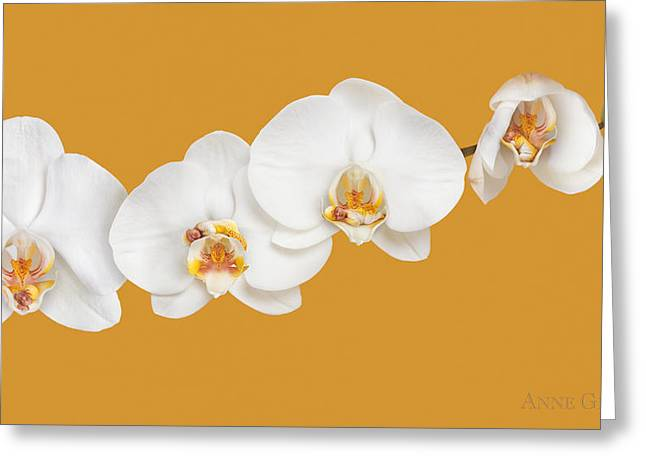 Orchids Greeting Cards - Mia, Nakeeta, Mia & Phoenix in Moth Orchids Greeting Card by Anne Geddes