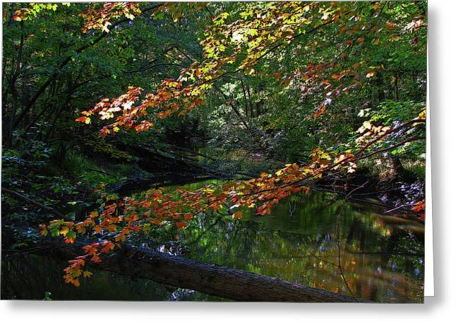 Fall Greeting Cards - Michigan Fall Colors 7 Greeting Card by Scott Hovind