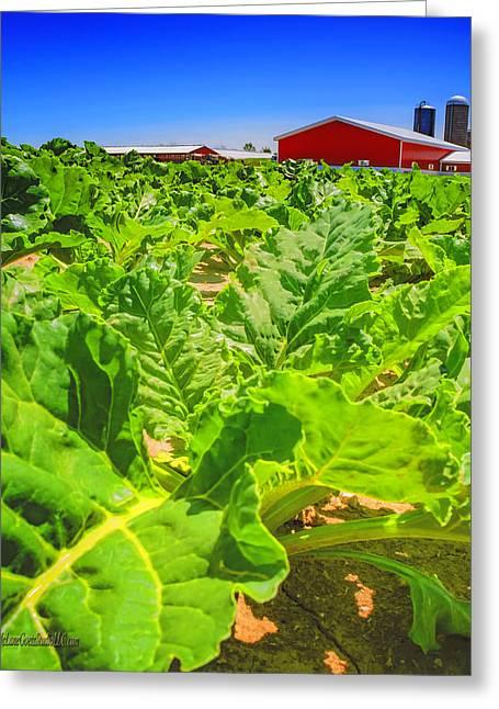 Michigan Surgar Beet Farming Greeting Card by LeeAnn McLaneGoetz McLaneGoetzStudioLLCcom