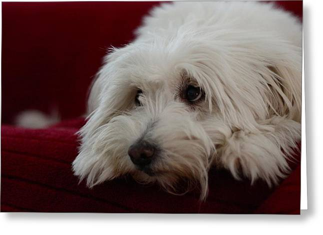Puppies Photographs Greeting Cards - Mickey the Thinker Greeting Card by Lin Krstic