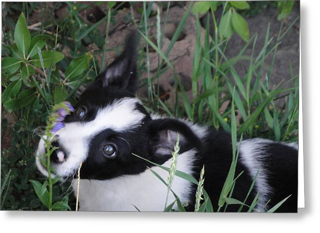 Puppies Photographs Greeting Cards - Mickey with Purple Flower Greeting Card by Sandra Dalton
