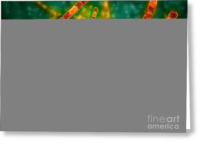 Spores Greeting Cards - Microscopic View Of Anthrax Greeting Card by Stocktrek Images