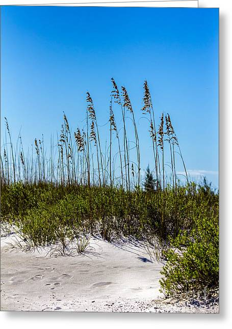 Sandpipers Greeting Cards - Mid Day Dunes Greeting Card by Marvin Spates