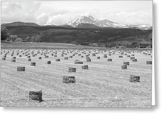 Bw Canvas Art Greeting Cards - Mid June Colorado Hay  and the Twin Peaks Longs and Meeker BW Greeting Card by James BO  Insogna
