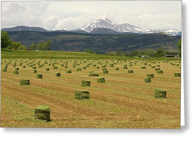 Office Space Photographs Greeting Cards - Mid June Colorado Hay  and the Twin Peaks Longs and Meeker Greeting Card by James BO  Insogna
