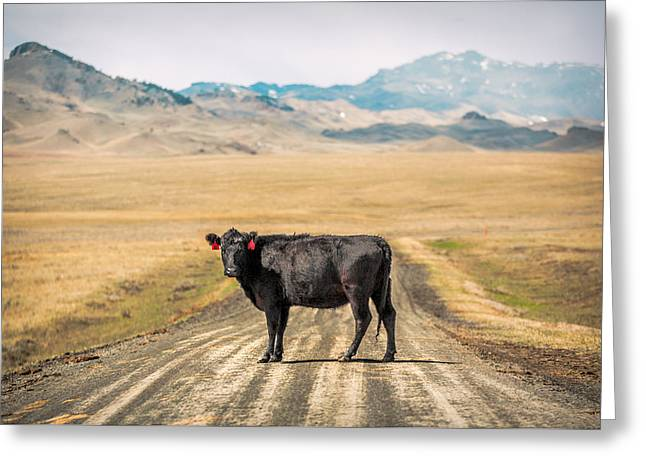 Middle Of The Road Greeting Card by Todd Klassy