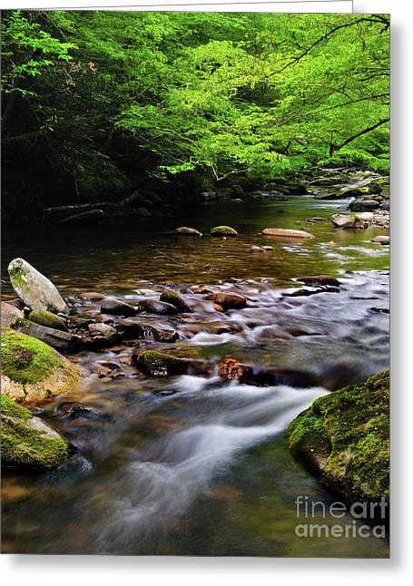 Moss-covered Greeting Cards - Middle Prong Little River spring Greeting Card by Thomas Schoeller