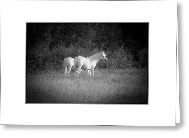 Pastureland Greeting Cards - Midi white horses. Greeting Card by Antonio Costa