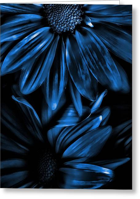 Royal Mixed Media Greeting Cards - Midnight Blue Gerberas Greeting Card by Bonnie Bruno