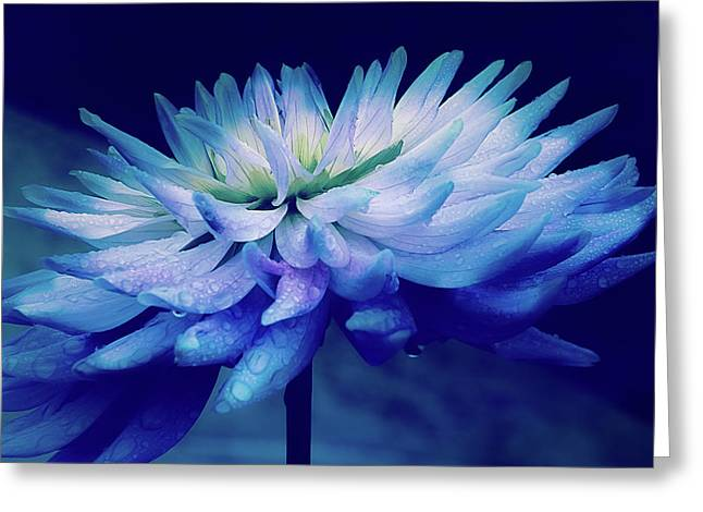 Midnight Dahlia And Drops Greeting Card by Julie Palencia