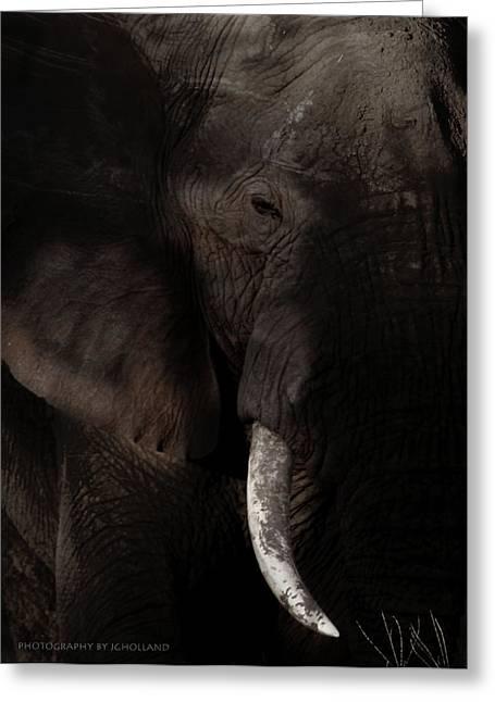 Elephants Eye Greeting Cards - Midnight Encounters Greeting Card by Joseph G Holland
