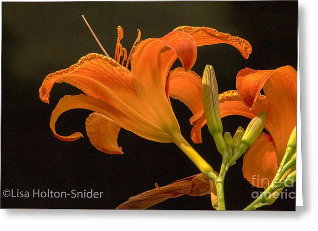 Day Lilly Greeting Cards - Midnight Lilly Greeting Card by Lisa Holton-Snider