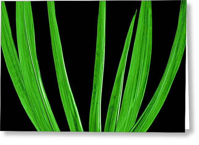 Fens Greeting Cards - Midnight Palm Greeting Card by Slade Roberts