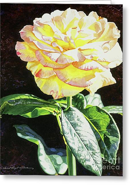 Roses Greeting Cards - Midnight Rose Greeting Card by David Lloyd Glover