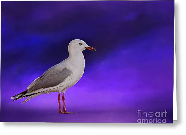Aquatic Bird Greeting Cards - Midnight Seagull by Kaye Menner Greeting Card by Kaye Menner