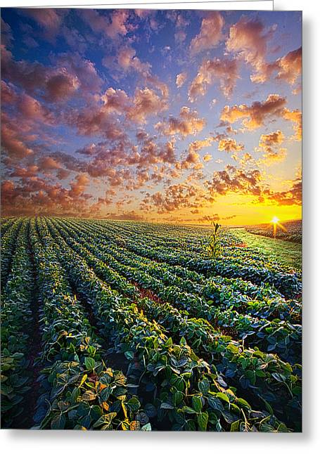 Crop Greeting Cards - Midsummers Dream Greeting Card by Phil Koch