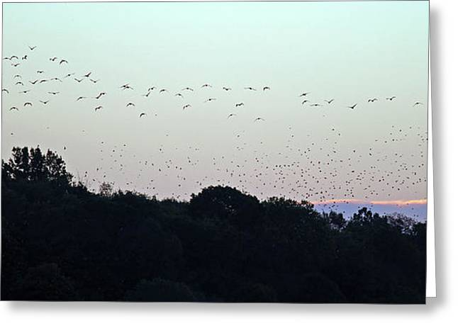 Migration Flyway Greeting Card by Steve Gass