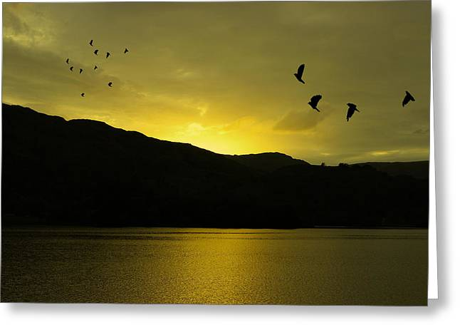 Low Light Greeting Cards - Migration Greeting Card by Martin Newman